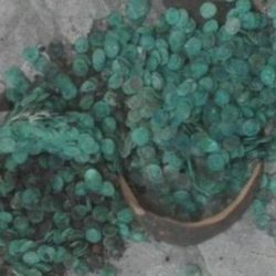 Coin-Hoard-Mezdra